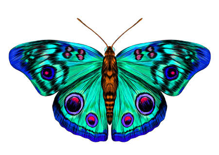 butterfly peacock eye green pink blue turquoise fabulous barcode beautiful vector illustration