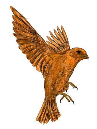 Sparrow bird brown in flight vector illustration