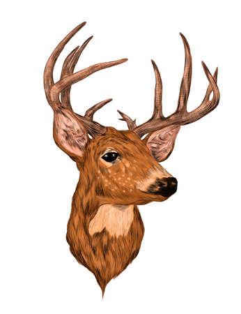 deer head with big horns brown sketch vector illustration print