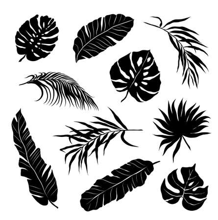 palm leaves set black and white vector