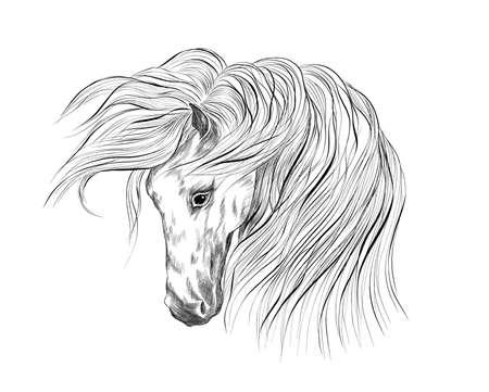 black white horse head coloring sketch vector illustration