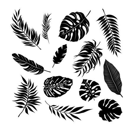 palm leaves set pattern black and white vector