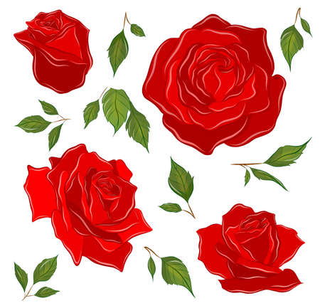 set of roses red and leaves to create composition pattern flowers vector illustration