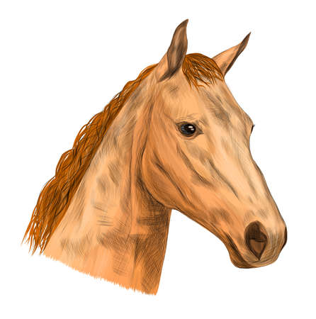 brown horse head face with light mane vector illustration