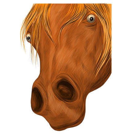 brown horse face portrait of a funny vector illustration Ilustracja