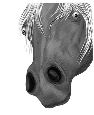 gray horse face portrait of a funny vector illustration