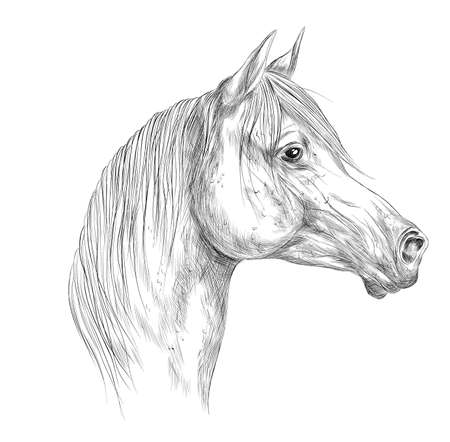 horse black white head sketch vector illustration Ilustracja