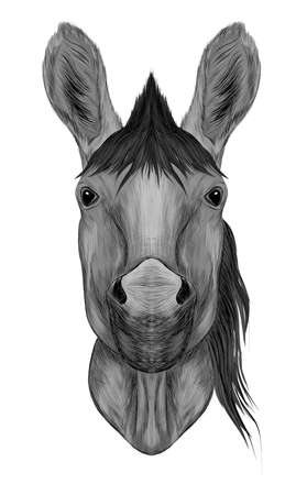 horse head of a black white mane sketch vector illustration