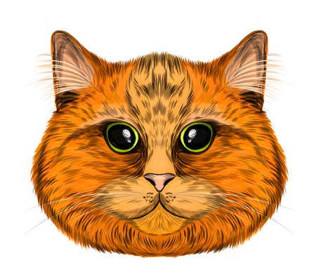 cat red orange head portrait funny vector illustration