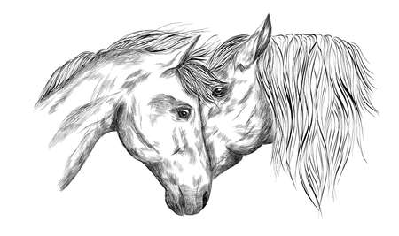 horses portrait in love black and white sketch coloring animals vector illustration