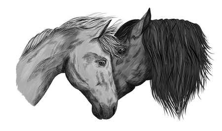 horses portrait in love black and white animals vector illustration Ilustracja