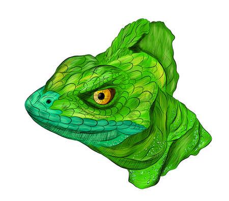 lizard reptile head green Basilisk stroke realistic vector illustration