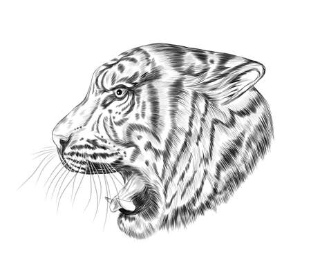 head tiger profile black and white sketch coloring book vector illustration