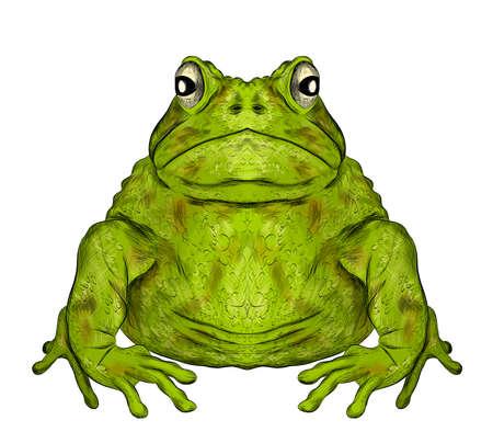toad green funny animal symmetric vector illustration Ilustracja