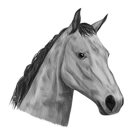 horse head of a black gray white mane sketch vector illustration Ilustracja