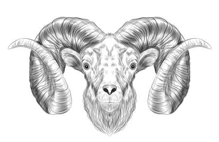 RAM with horns sketch black and white ungulate vector illustration