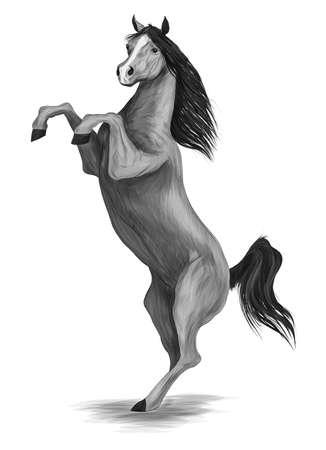 horse gray and black vector illustration Ilustracja