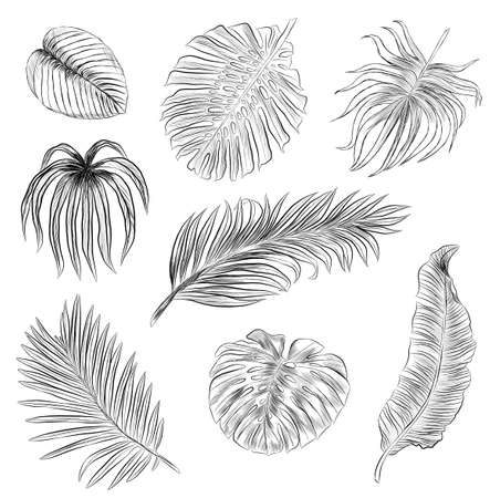 set of palm leaves black and white sketch vector illustration of coloring book print seamless pattern