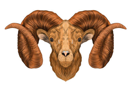 RAM with horns brown ungulate vector illustration