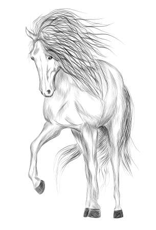 horse white and black sketch coloring vector illustration