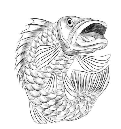 fish perch ruff carp black and white sketch stylized cartoon funny graphics vector illustration print