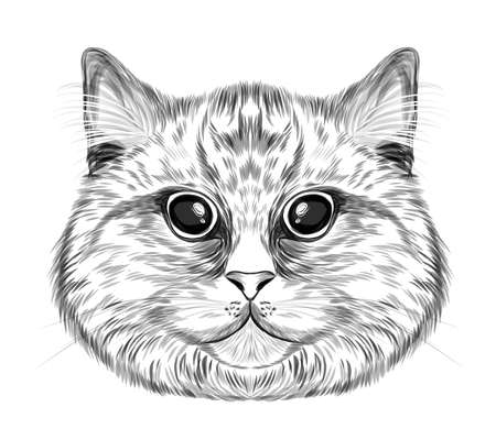 cat head portrait black and white coloring sketch funny vector illustration
