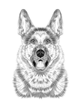 German shepherd black and white sketch coloring book portrait vector illustration
