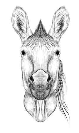 horse black white head sketch symmetrical vector illustration
