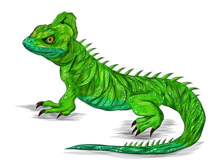 lizard reptile green Basilisk stroke realistic vector illustration