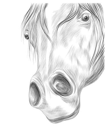 horse face portrait black and white sketch of a funny vector illustration
