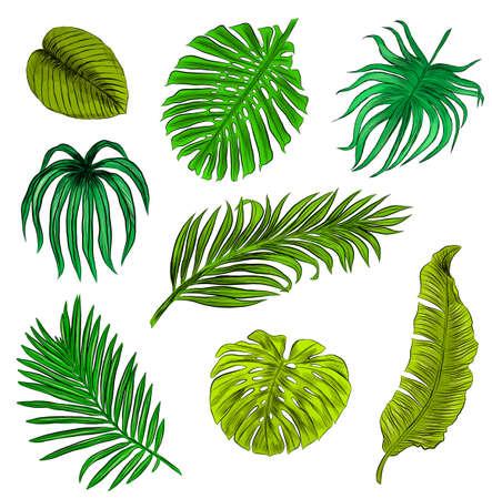 set of green palm leaves vector illustration print seamless pattern Ilustracja