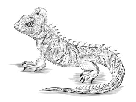 lizard reptile Basilisk black and white sketch graphics coloring print stroke realistic vector illustration