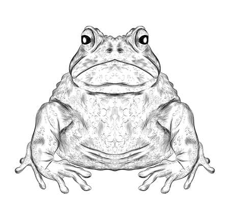toad black and white sketch coloring book funny animal symmetric vector illustration