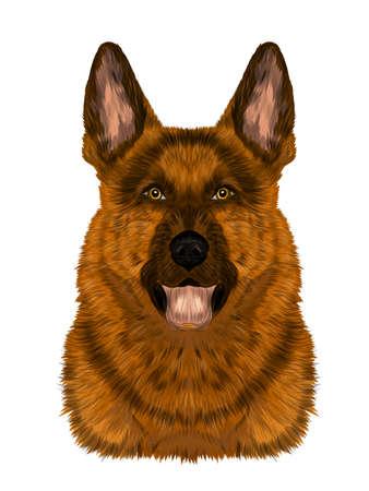 head German shepherd brown dog portrait vector illustration