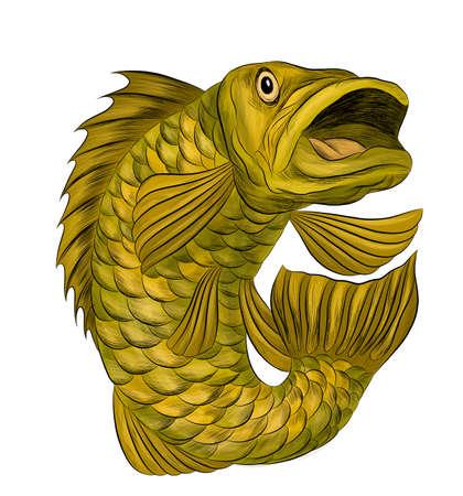 fish perch ruff carp green stylized cartoon funny graphics vector illustration print