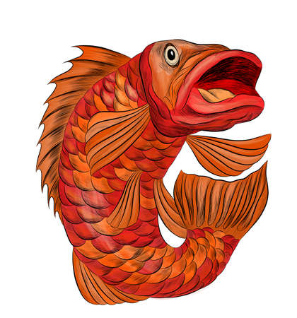 fish perch ruff carp red stylized cartoon funny graphics vector illustration print