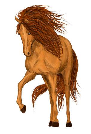 brown horse animal vector illustration