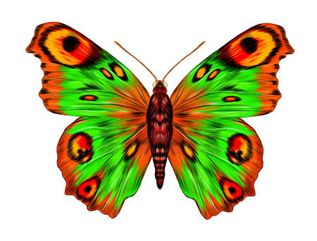 peacock eye fabulous barcode beautiful Urania Madagascar vector illustration green yellow orange butterfly