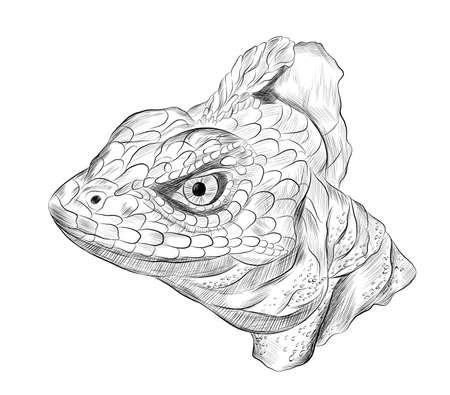 lizard reptile head Basilisk black and white sketch graphics coloring print stroke realistic vector illustration