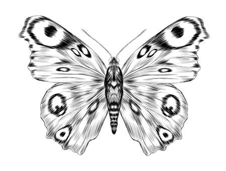 peacock eye fabulous barcode sketch of the tattoo coloring black and white beautiful Urania Madagascar vector illustration butterfly