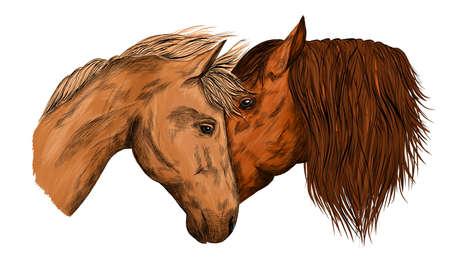 horses portrait in love brown animals vector illustration