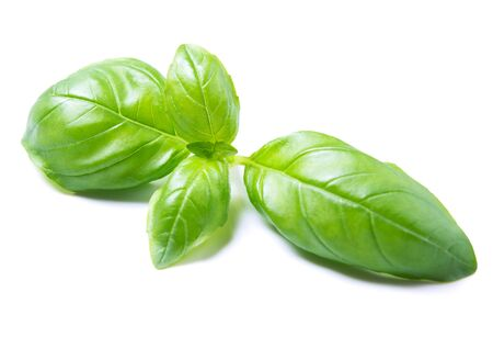Basil herb green leaves isolated on white background