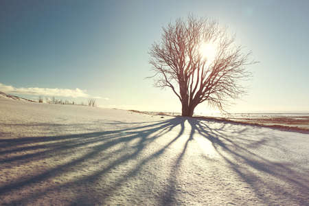 Beautiful winter tree with shadow and sun, vintage filter, Iceland