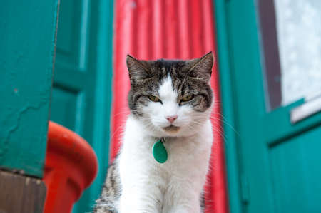 Serious cat on a bright background with green house and red door Stock fotó