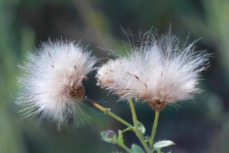 bushy plant: bushy plant