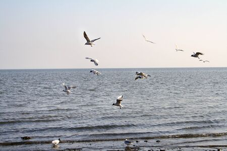 afloat: seagulls over the sea in autumn