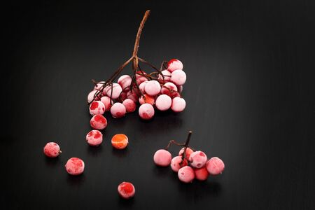 guelder rose berry: Frozen red viburnum berries on a black background Stock Photo