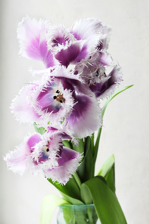 Vijf paarse bloemen venster op de achtergrond