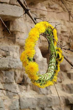 decomposition: The wreath of dandelions on the stump of the old tree