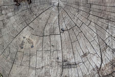 transverse: transverse cutting of an old dry wood Stock Photo